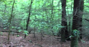 360 Degree View of Hiking Trail at Fall Creek Falls State Park, Tennessee
