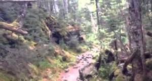 Ammonoosuc Ravine Trail Part 1. Hiking Mount Washington