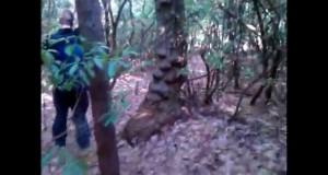 Bartram Trail Hiking Trips (2009-2011)