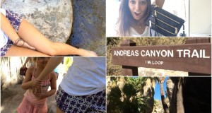 Bye Palm Springs, Coolest Hiking Trail, NYFW GIFT