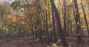 Hemlock Cliffs & Adventure Hiking Trail