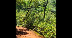Hiking Sleeping Giant west trail 2