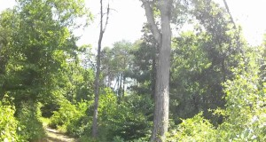 Hiking the Bald Eagle Trail and Beech Bluff Trail in Greensboro, NC