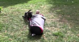 K9 Camping: Dog, Sleeping-bag, and You!