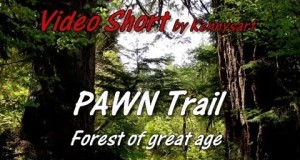 Pawn trail hike geocaching a forest of great age, 2014
