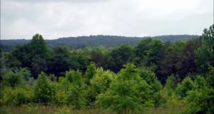Thornburg Trail: Hiking Birkhead Mountain Wilderness in Uwharrie National Forest